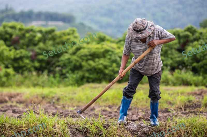 چگونه یک کشاورز شویم