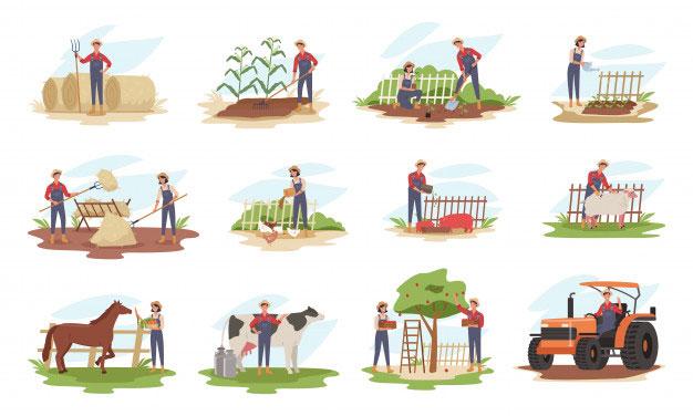 تعدادی کشاورز هر کدام کاری انجام می دهند